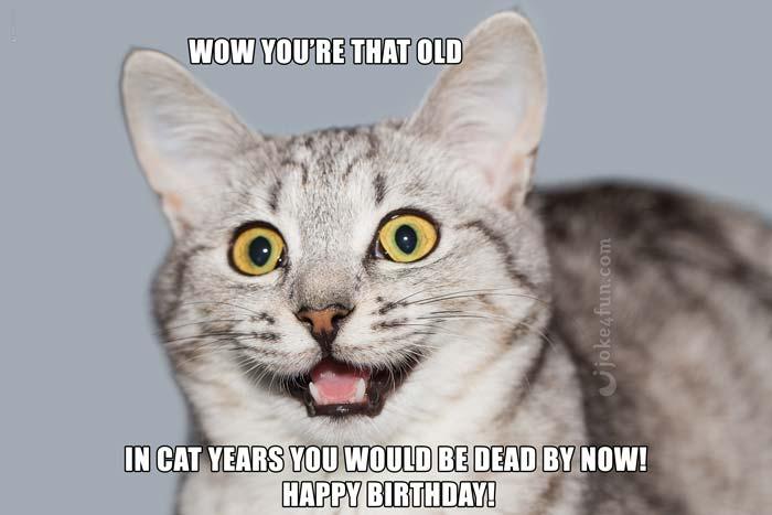 Funny Cat Birthday Meme : Joke fun memes happy birthday you cat lover