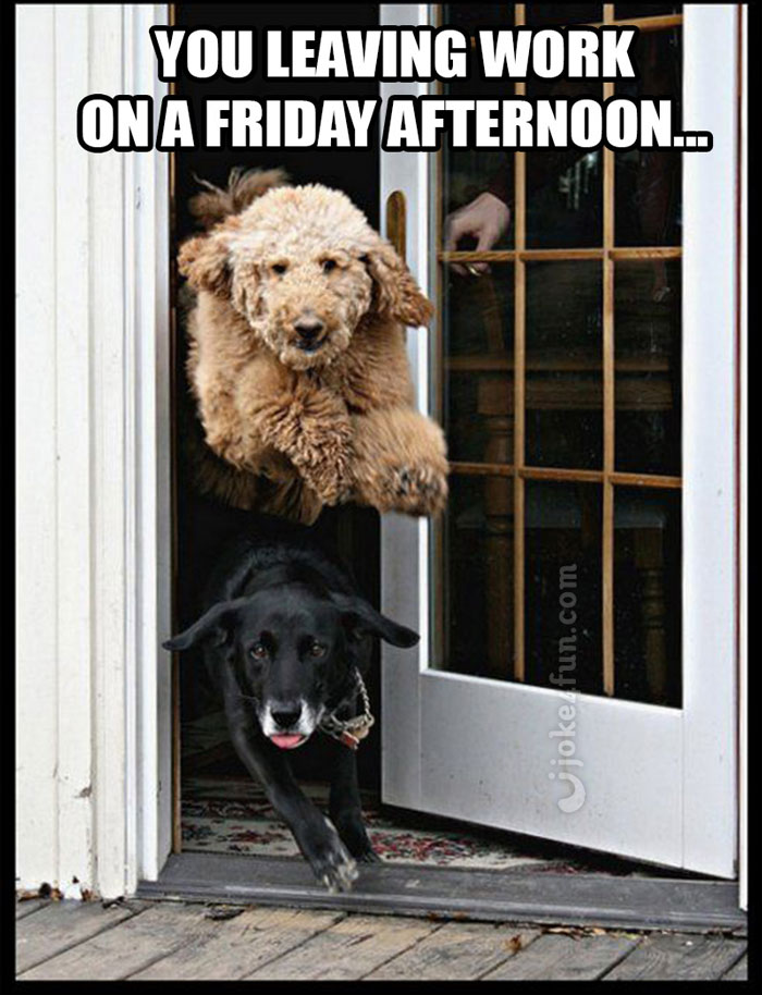 Funny Friday Dog Pictures