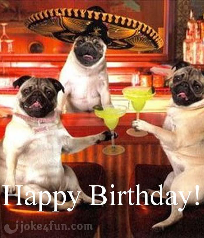 Joke4Fun Memes: Pugs And Kisses On Yout Birthday