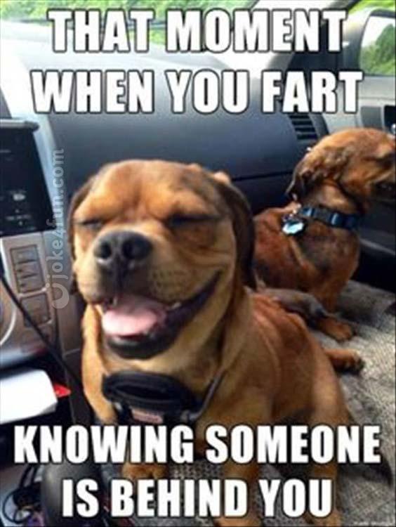 Dunia Belajar Dog Jokes Dirty