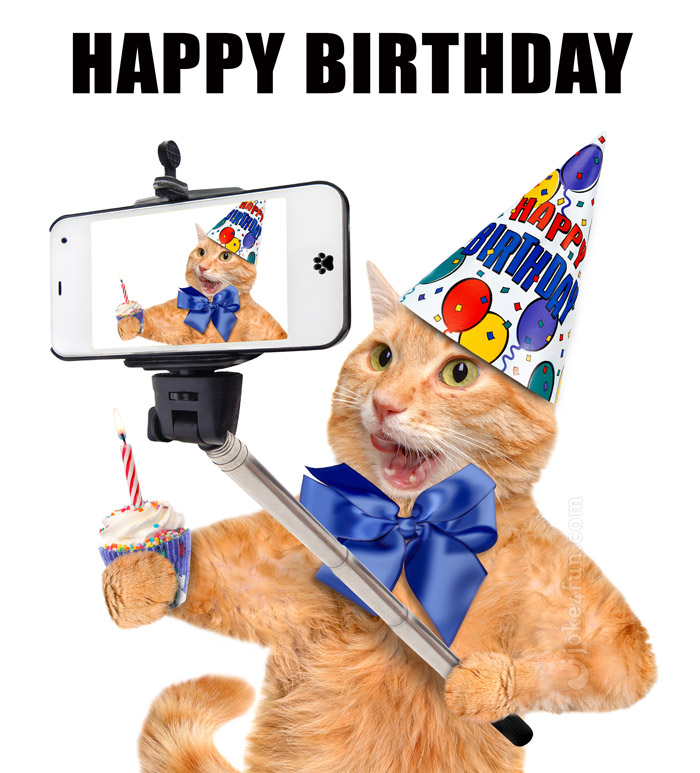 Joke4Fun Memes Happy Birthday You Cat Lover