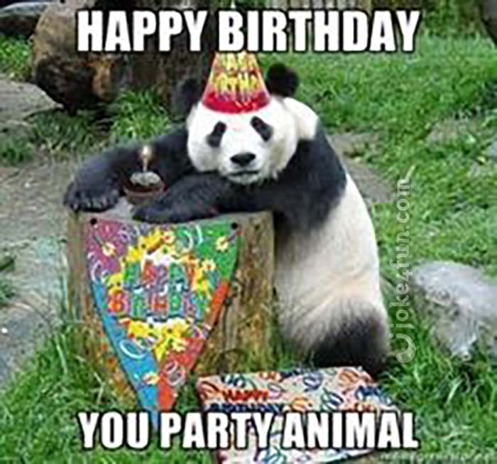2zwg4emljl1q joke4fun memes party animal