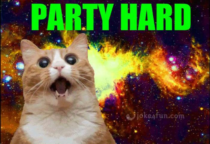 Funny Cat Birthday Meme : Joke fun memes happy birthday