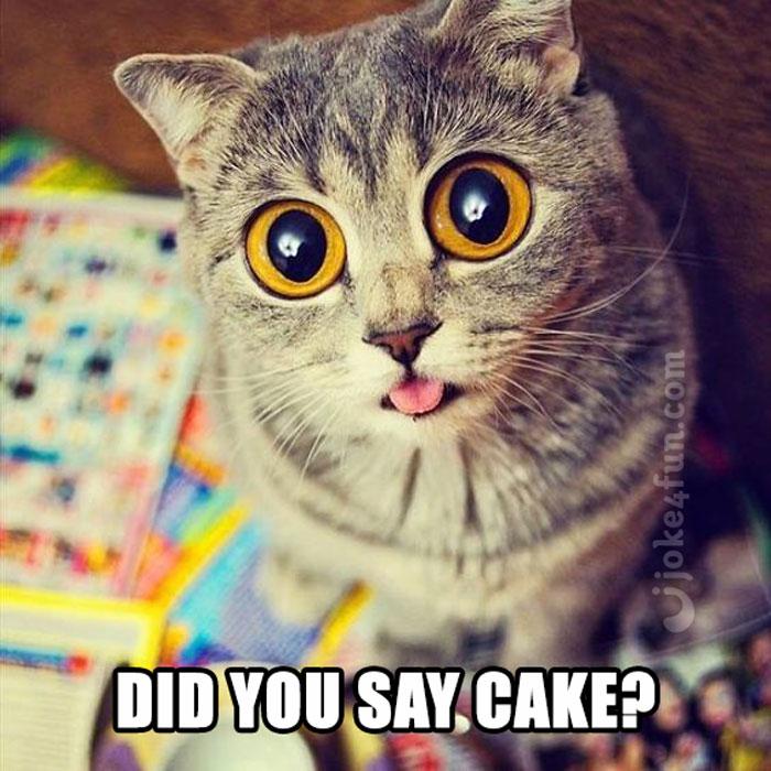 Cat Cake Pics
