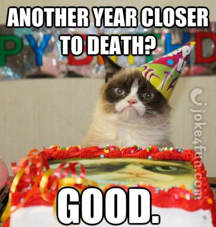 Joke4Fun Memes Cat Wishes U Happy Bday