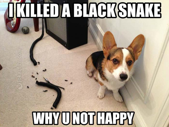 Funny Meme Pictures Of Dogs : Joke4fun memes: killed a black snake