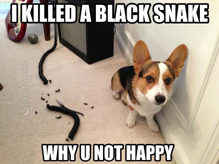 Joke4fun Memes Killed A Black Snake