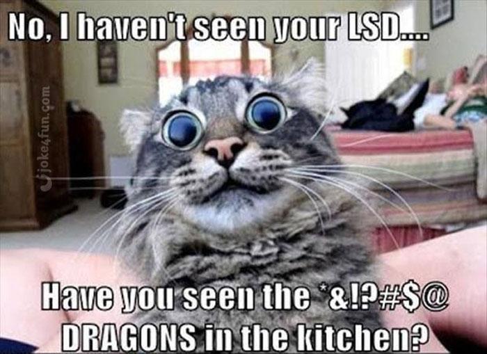 Funny Cat Birthday Meme : Joke fun memes cute cat