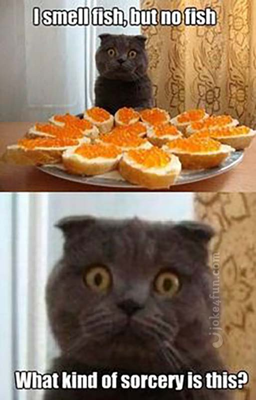 Black Man Cat Meme