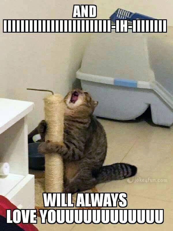 od7jkzn0j516 joke4fun memes big whitney houston fan