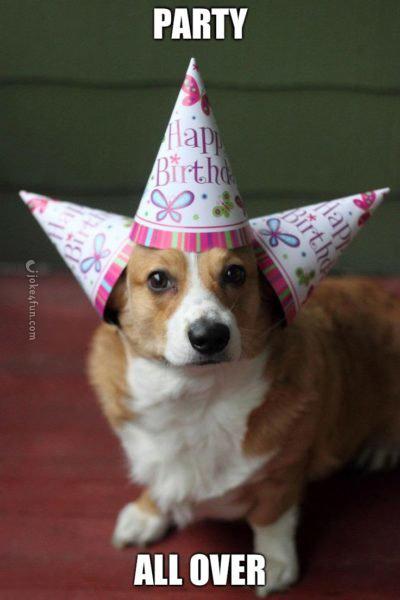 od7jkzoxj516 joke4fun memes cats wish you a happy birthday!