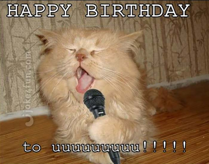 Funny Cat Memes Clean : Joke4fun memes: cat will perform a birthday song just for you