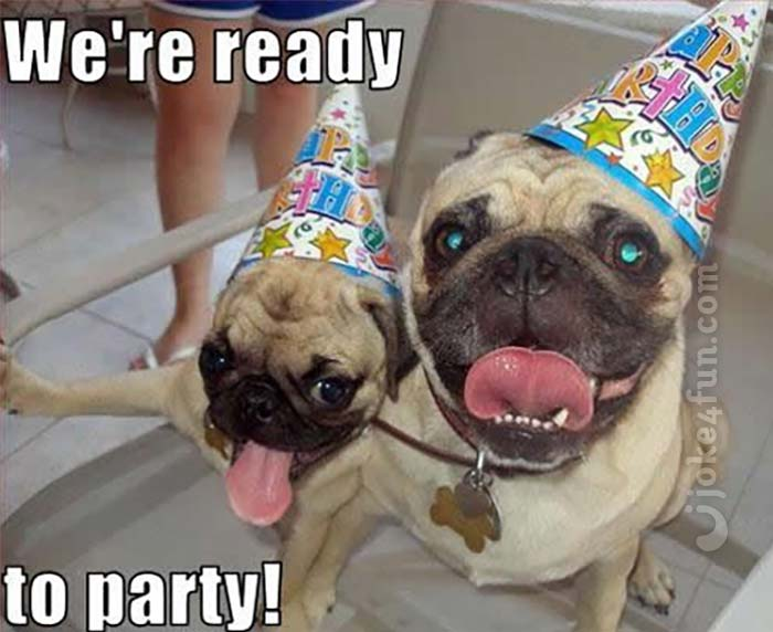 Funny Birthday Memes Dogs